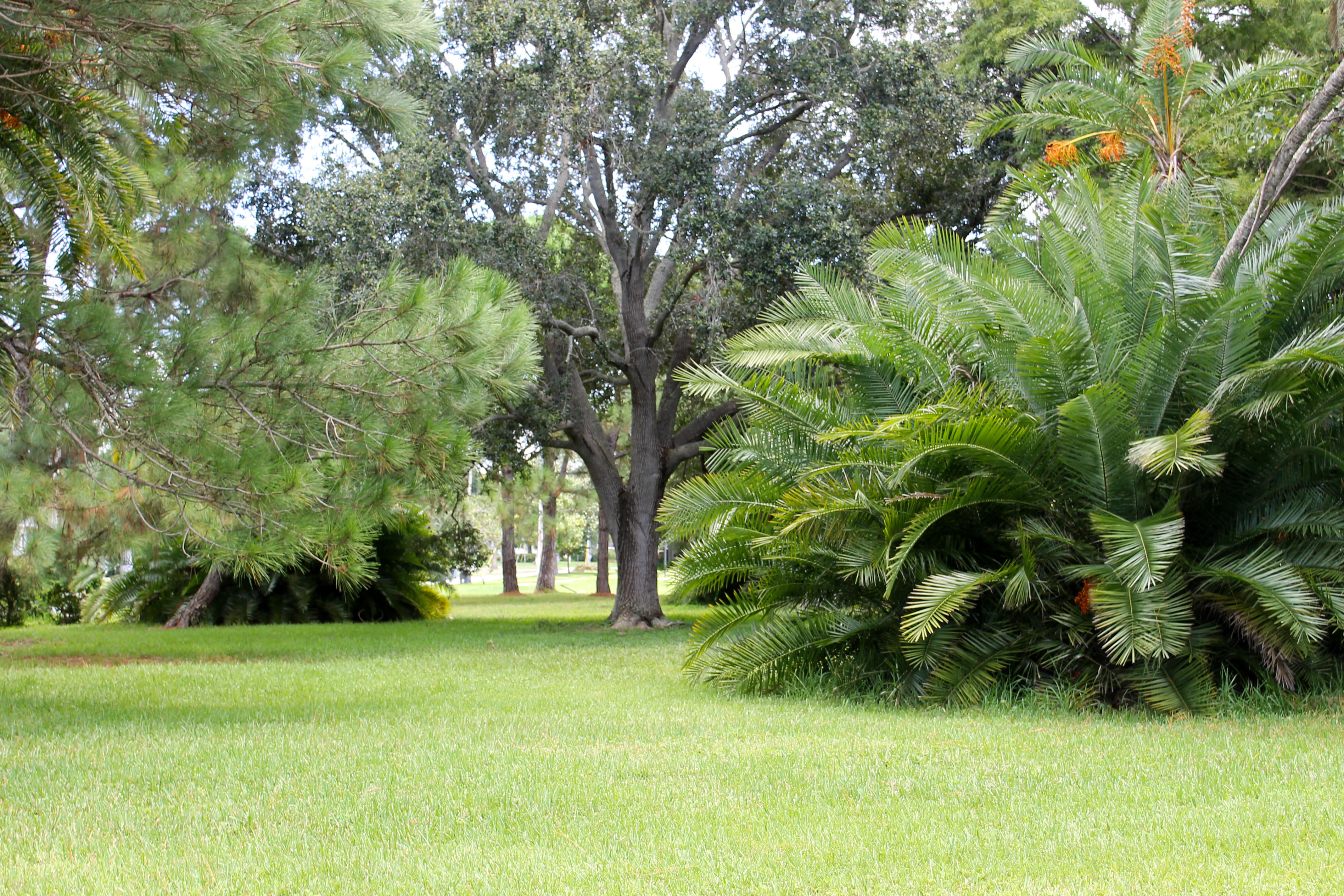 A grassy area in Pinellas Park with large shrubs and trees in the background