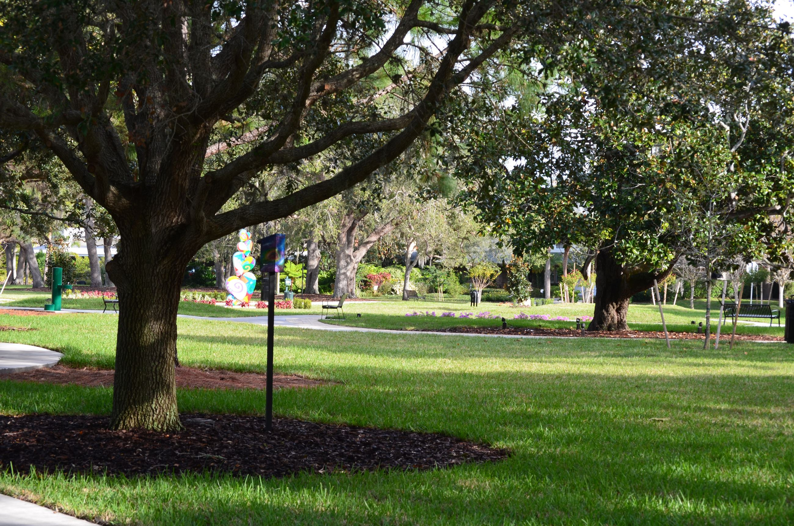 A view of Doyle Park that focuses on an oak tree with grassy spaces in the background