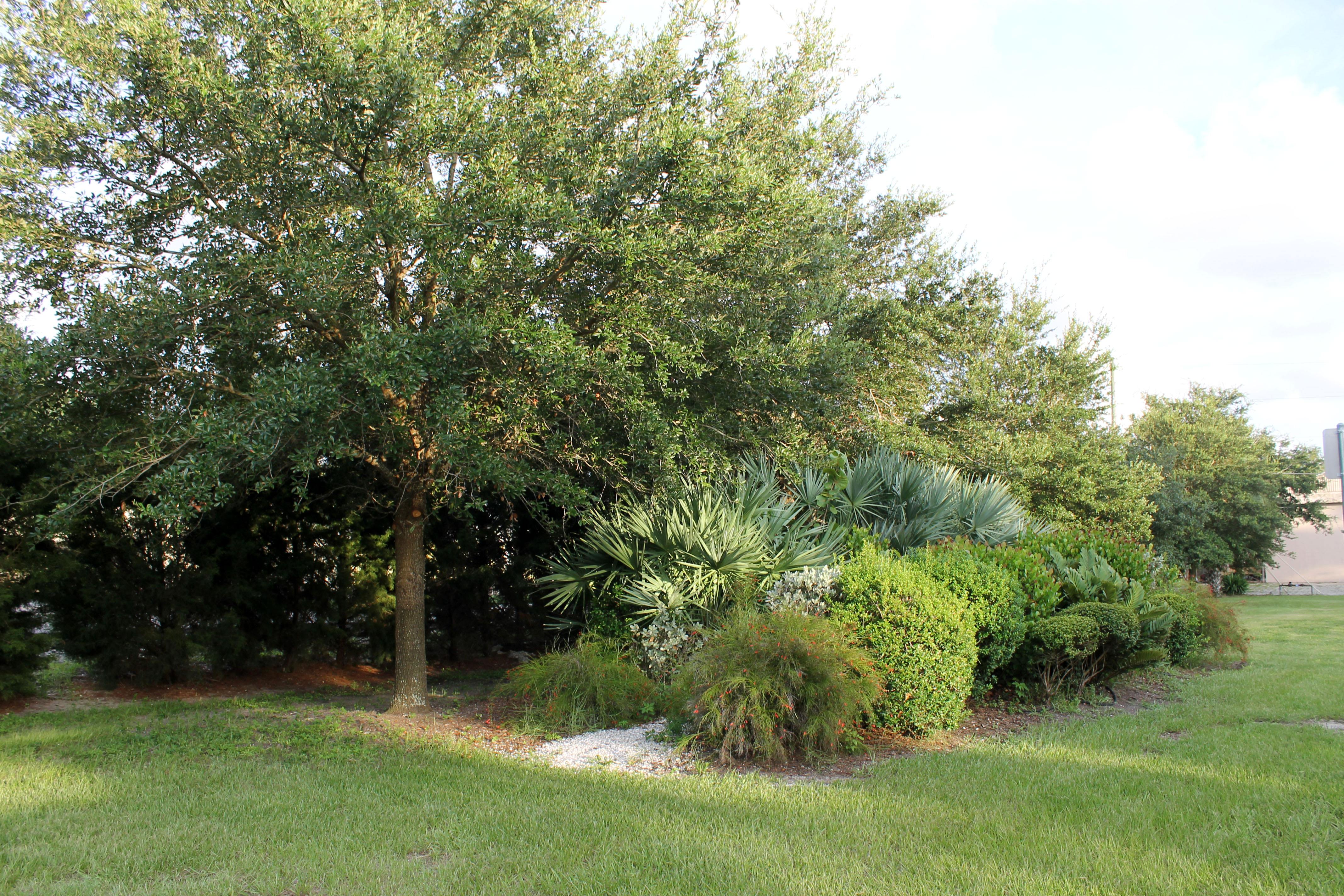 A section of trees and shrubs along the back of Wildwood Park